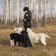Осенняя прогулка лабрадоров