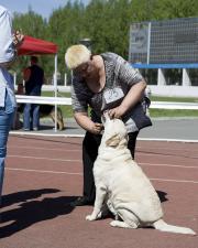 лабрадор фото на выставке в Челябинске